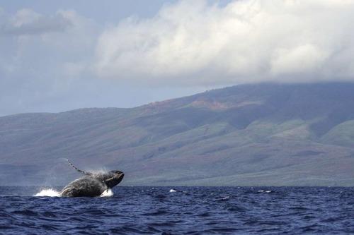 Maui_108.jpg