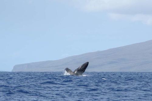 Maui_109.jpg