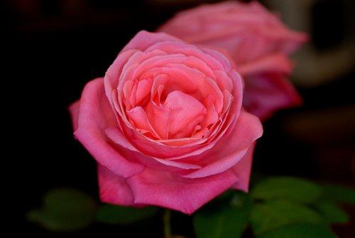 Flora_004.jpg
