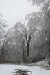 ICE STORM 2013 CA1 010.jpg