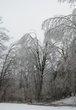 ICE STORM 2013 CA1 013.jpg