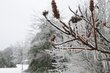 ICE STORM 2013 CA1 015.jpg