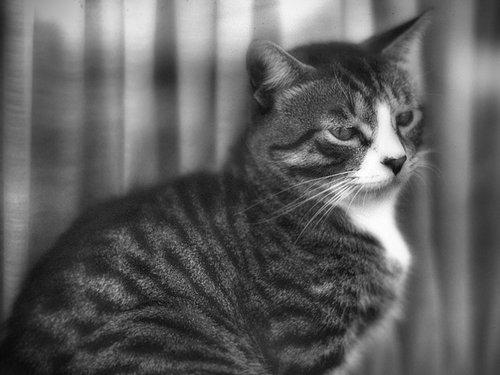 Kitten in The Window.jpg