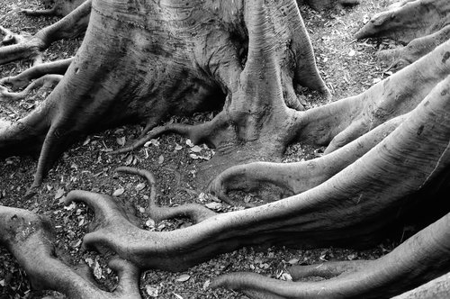 Roots Balboa Park San Diego Ca.jpg