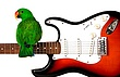 Kiwi on guitar.jpg