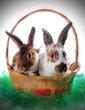bunny fixed.jpg