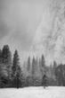 A-Winter-Storm.jpg