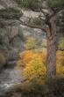 Ponderosa-Pine-and-Rush-Creek2.jpg