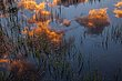 Sunrise Clouds Reflected Tuolumne Meadows.jpg
