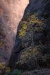 Zion-Gold-2000px.jpg