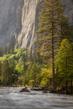 Springtime in Yosemite.jpg