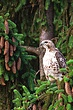 Birds_of_Prey_000.jpg