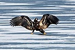 Birds_of_Prey_002.jpg