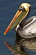 Ding_Darling_NWR_MG_1268_037.jpg