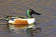 Ducks_001.jpg