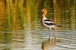 Shore_Birds_000.jpg