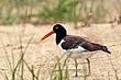 Shore_Birds_0021.jpg