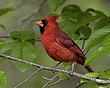 Song_Birds_002.jpg