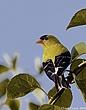 Song_Birds_003.jpg