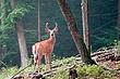Wildlife_003.jpg