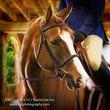 horse-2a.jpg