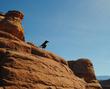 Arches Raven.jpg