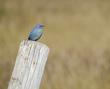 Bluebird 2.jpg
