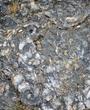Fossil Floor.jpg
