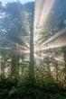 Redwoods Sunrise II.jpg
