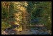 Sol Duc River Autumn I.jpg