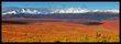 Denali Tundra and Mountains.jpg