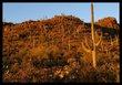 Saguaro Sunrise I.jpg