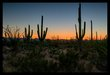 Saguaro Sunset I.jpg