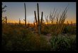 Saguaro Sunset III.jpg