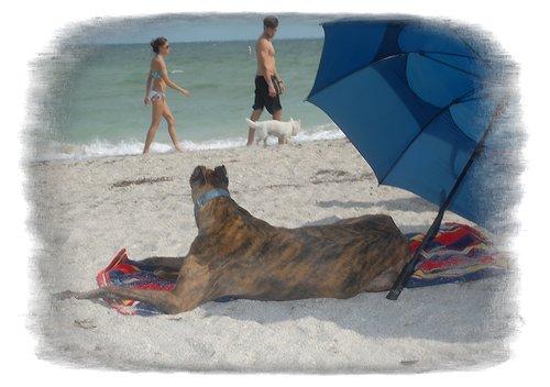 beach1_7901.jpg