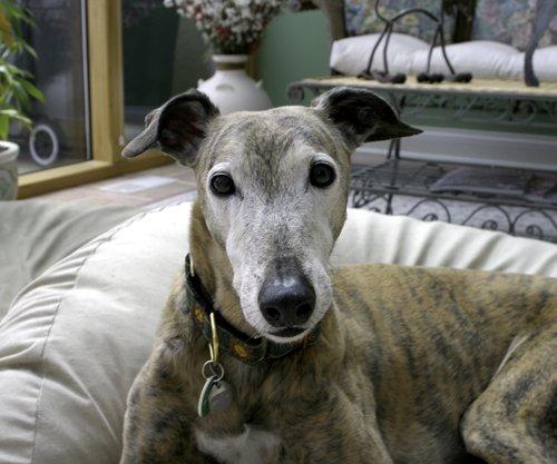 greyhound022-25.jpg