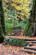 fall path2.jpg