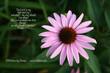 1Psalm 27-1 Pink Daisy_9578.jpg