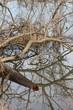 3303 Fallen tree .jpg