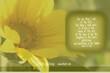4 Sunflower 9458 (1).jpg