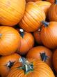5647 pumpkins.jpg