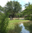 6672 girrafe brookfld zoo.jpg