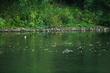 9389 Green pond WI.jpg