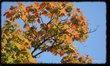 9557 Autumn.jpg