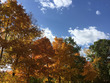 Autumn Trees  0817-5045a.jpg