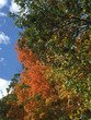 Autumn trees 1089.jpg