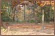 Autumn43531.jpg
