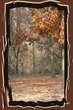 Autumn43541.jpg