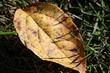 Brown leaf_9940.jpg