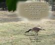 Duck 5283 ps 27 5 .jpg